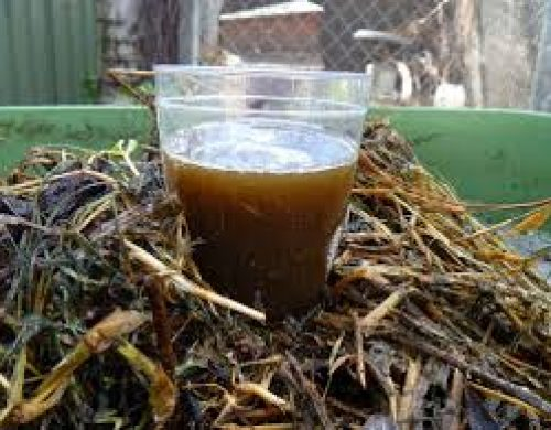 All About Compost Tea