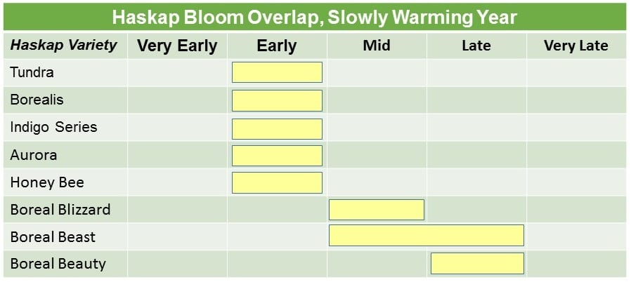 Haskap Bloom Slow Warming