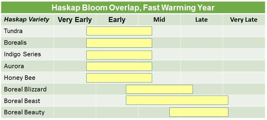 Haskap Bloom fast Warming