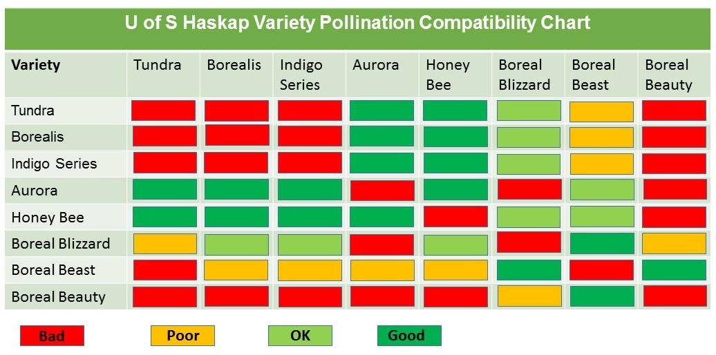 Haskap Compatibility Chart